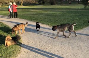 Největší park v Ostravě, kde je volný pohyb psů