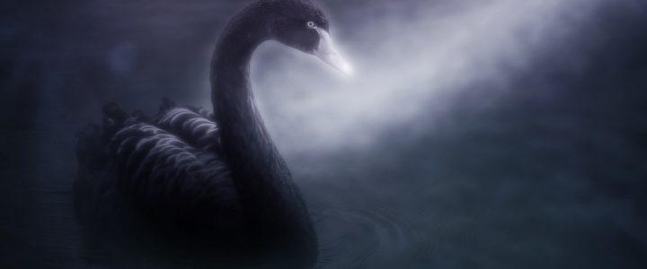 Krize nebo virus? Přiletěla černá labuť a svět se opět diví.